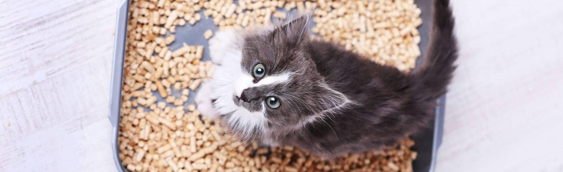 Kitten in litter