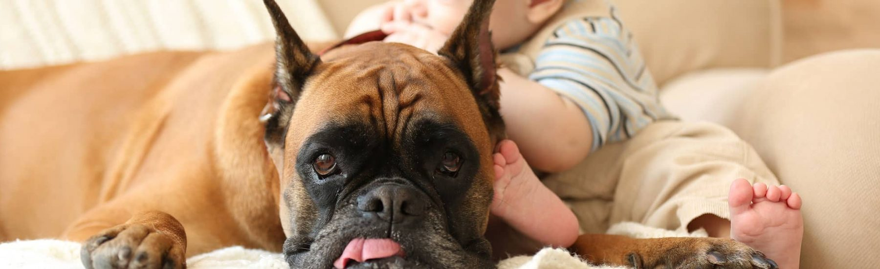 A dog with their tongue sitting beside a baby